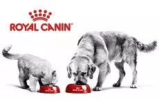 ro/royal-canin.jpg